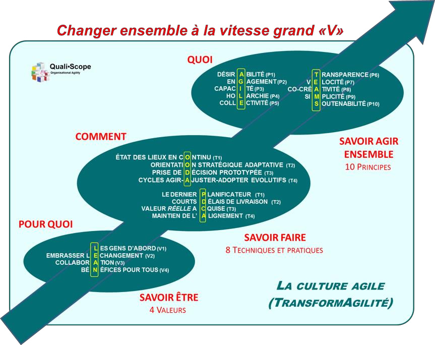 Culture agile : les principes du « savoir agir ensemble »